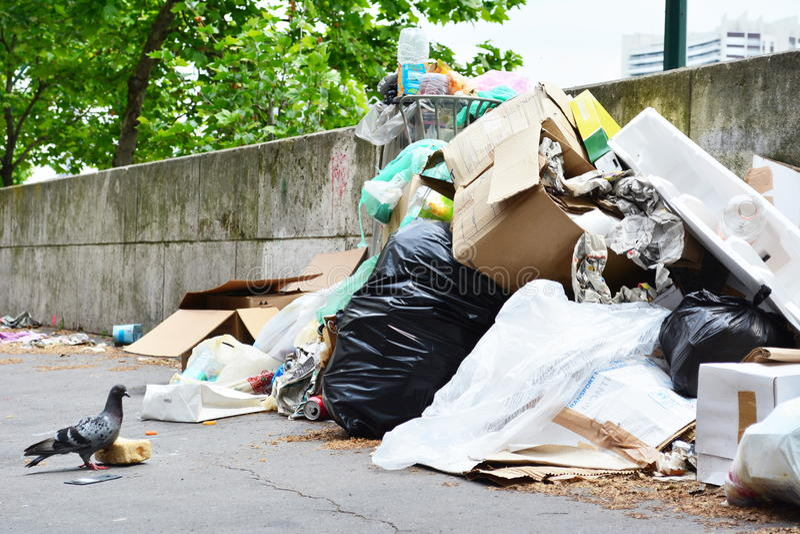 Pombo que guarda uma parte de pão ao lado do saco de lixo e de uma pilha fotografia de stock
