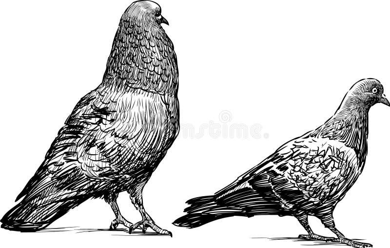 Pombos ilustração do vetor