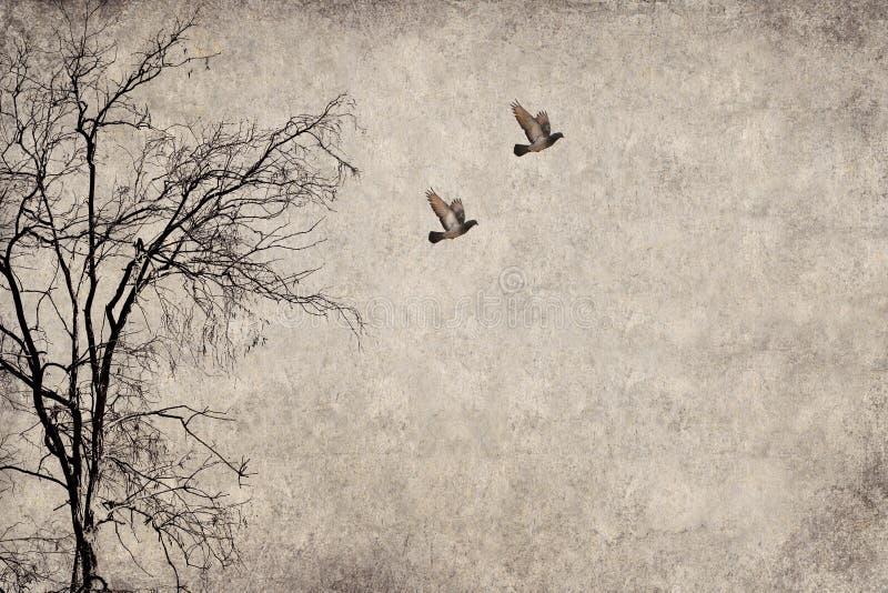 pombos ilustração stock