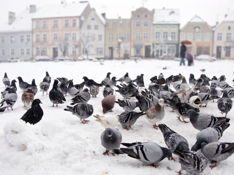 Pombos da neve imagem de stock