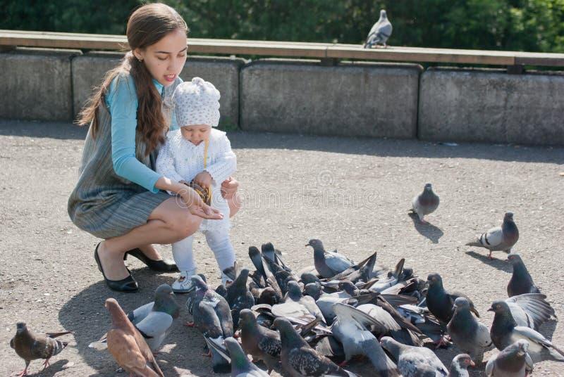 Pombos de alimentação da mamã e da filha fotografia de stock
