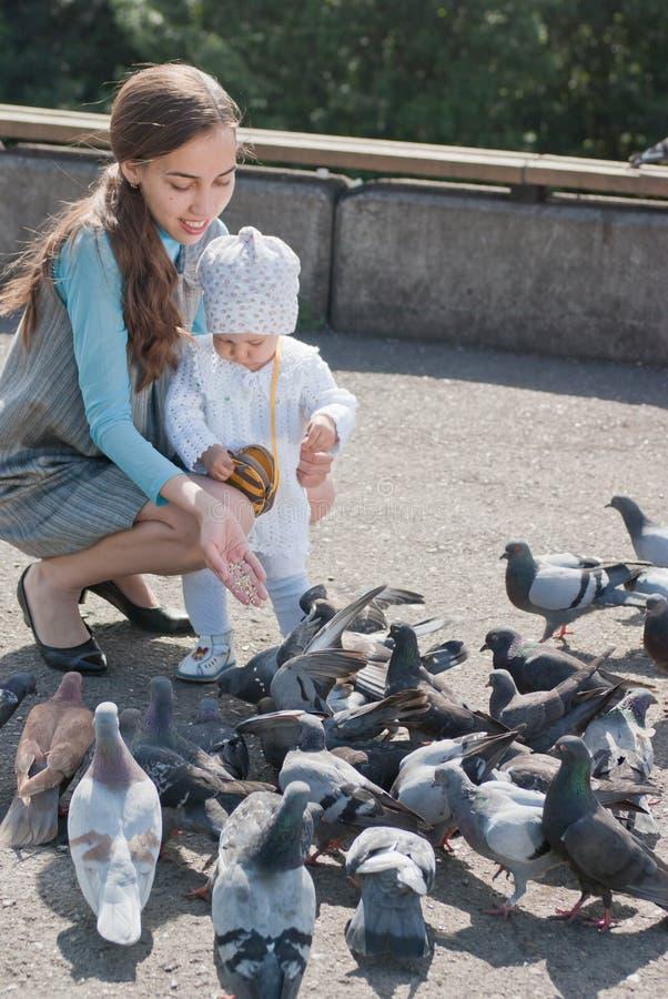 Pombos de alimentação da mamã e da filha imagens de stock royalty free