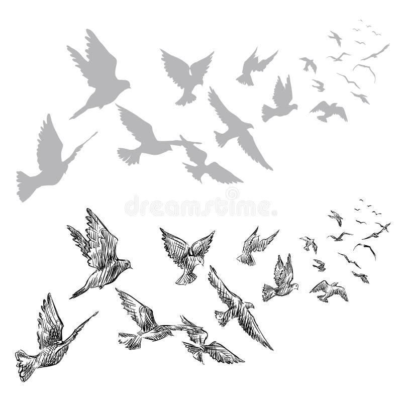 Pombos do voo, mão tirada ilustração do vetor
