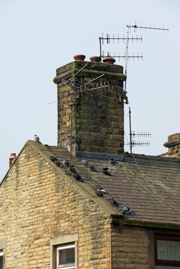 Pombos em um telhado fotografia de stock