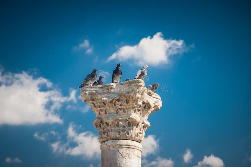 Pombos em uma coluna antiga imagem de stock
