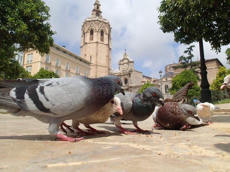 Pombos em Valência foto de stock royalty free