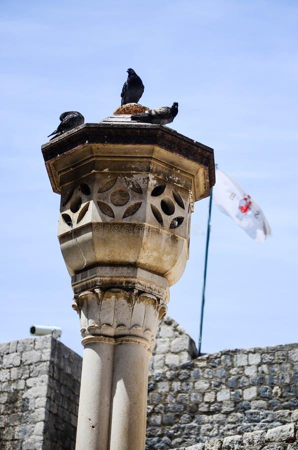 Pombos na coluna na cidade velha de Dubrovnik imagem de stock
