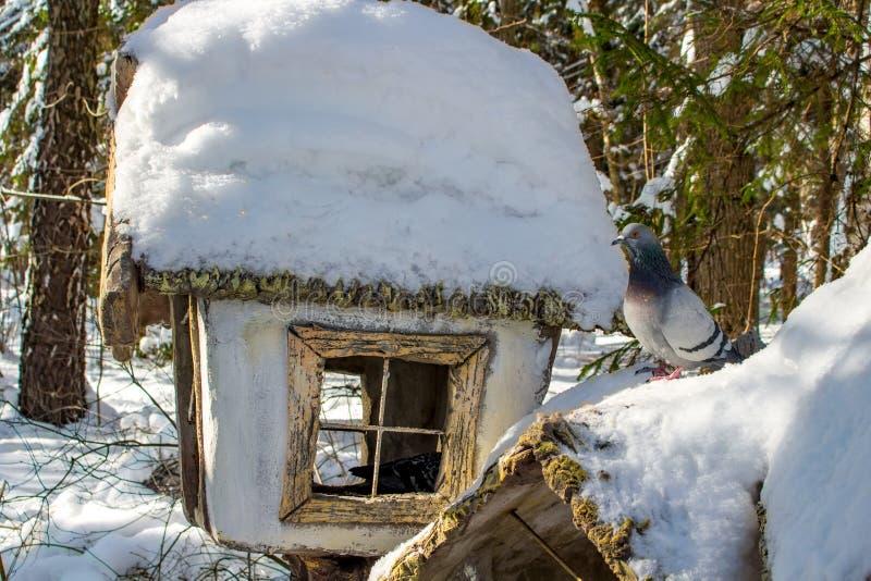 Pombos no inverno na calha de alimentação no parque imagens de stock royalty free