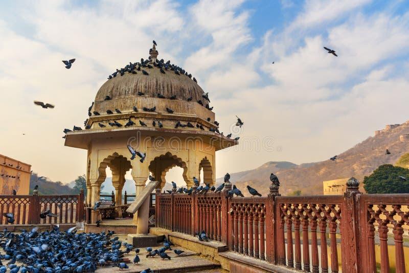 Pombos no pavilh?o perto do forte ambarino e no pal?cio no lago Maotha jaipur Rajasthan India foto de stock royalty free