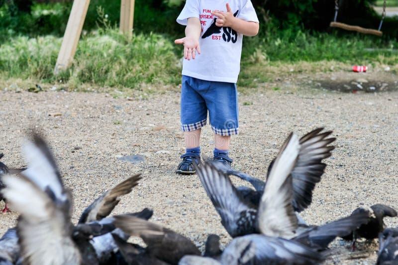 Pombos pequenos do feedind da mão fora foto de stock