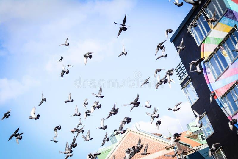 Pombos que voam no quadrado no grupo foto de stock royalty free