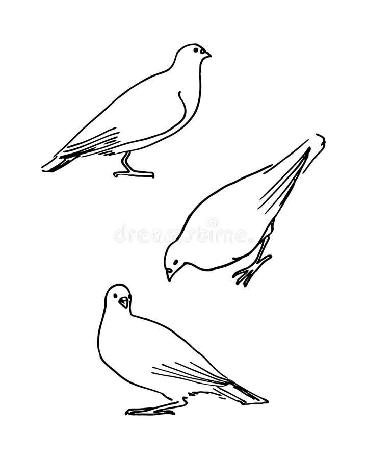 Pombos tirados mão do esboço no fundo branco Vetor ilustração do vetor