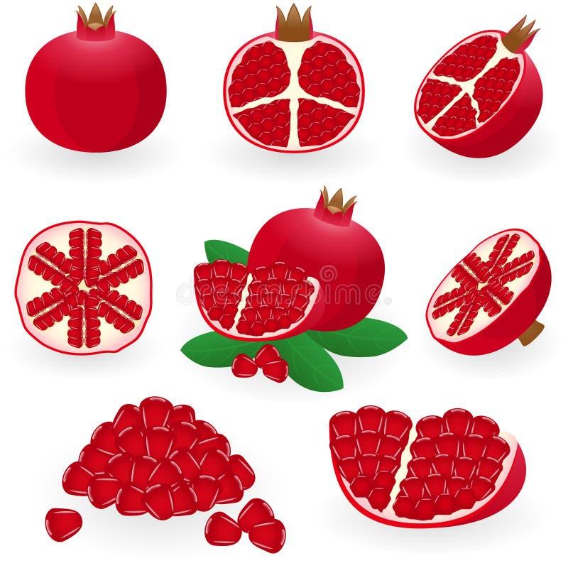 pomegranate иллюстрация штока