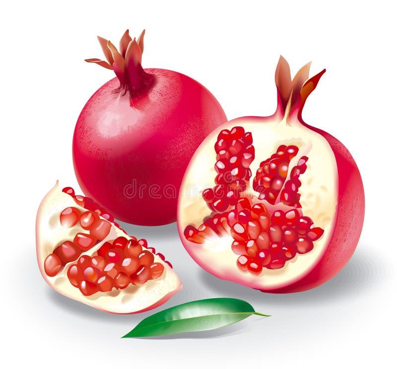 pomegranate royaltyfri illustrationer