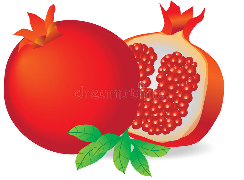 Pomegranate cut in half stock images
