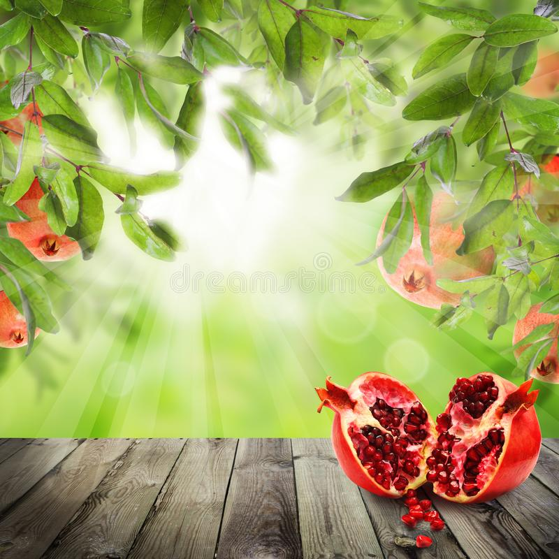 Pomegranate fruit. Food background with abstract bokeh light royalty free stock photos