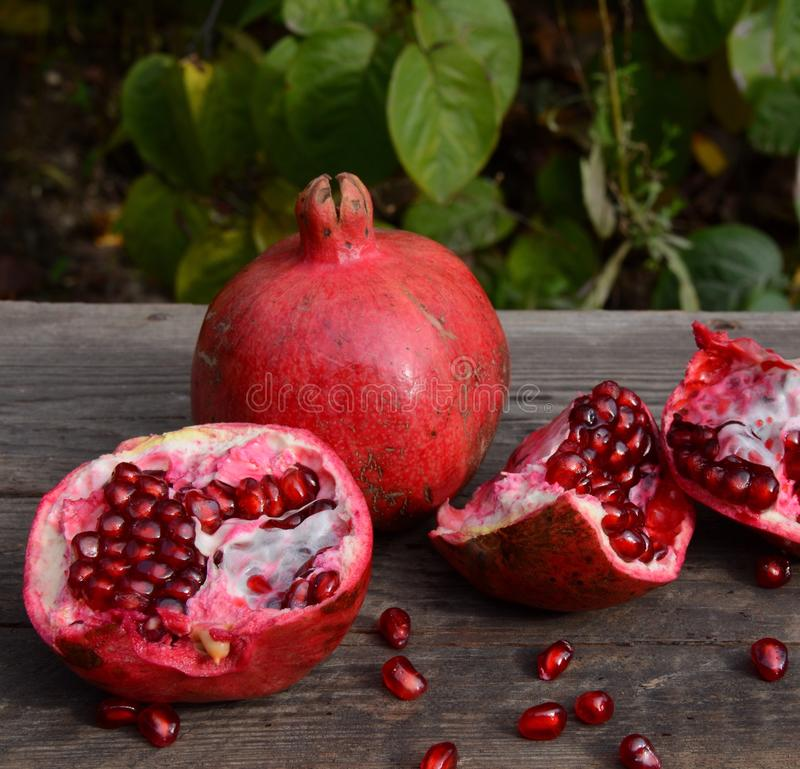 Pomegranate. From garden stock images