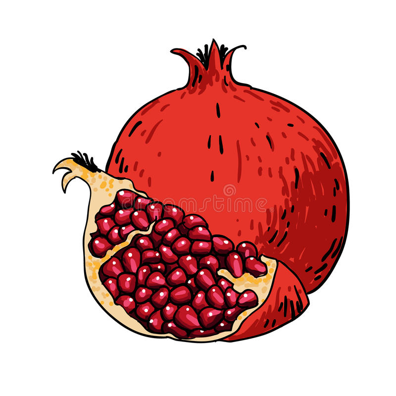 Free Pomegranate Hand Drawn Fruits Isolated Stock Image - 54157391
