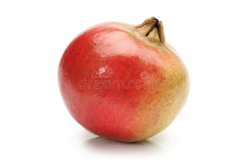 The Pomegranate Punica granatum. Is a fruit-bearing deciduous shrub or small tree growing to 5–8 m tall. The pomegranate royalty free stock photos