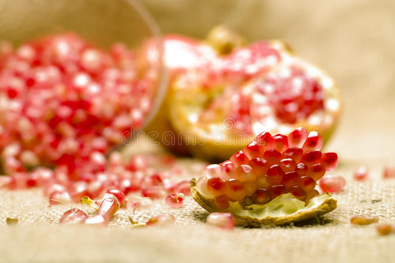Pomegranate (Punicagranatum) royaltyfria bilder