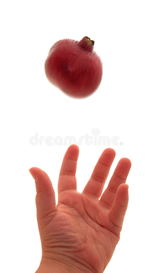 Download Pomegranate Toss stock image. Image of seeds, shrub, health - 20313