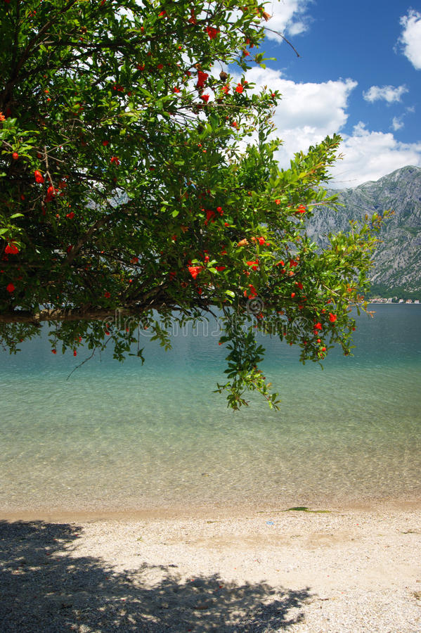 Pomegranate tree near the water stock images