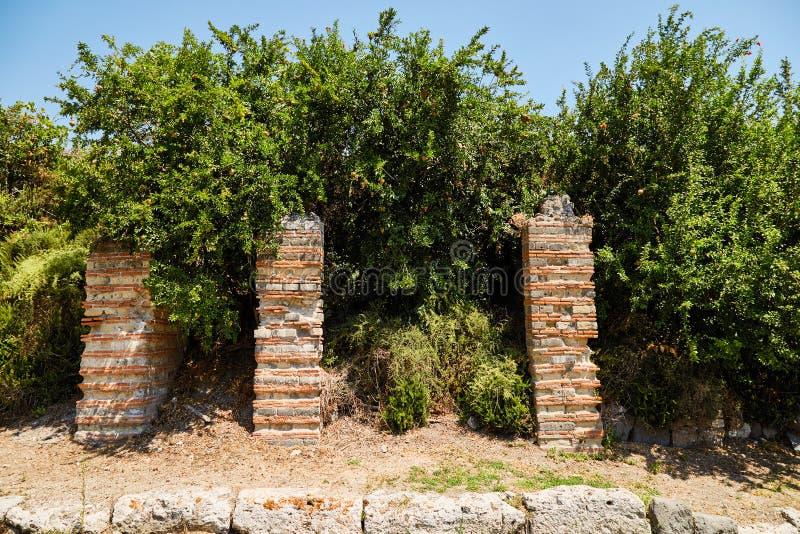Pomegranate trees in Pompeii, Italy royalty free stock photo