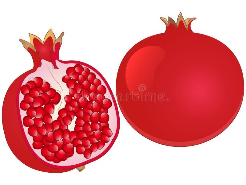 Pomegranate Vector Illustration royalty free illustration