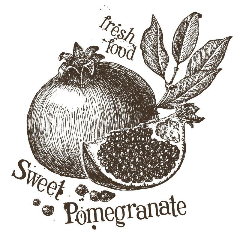 Pomegranate vector logo design template. fruit or stock illustration