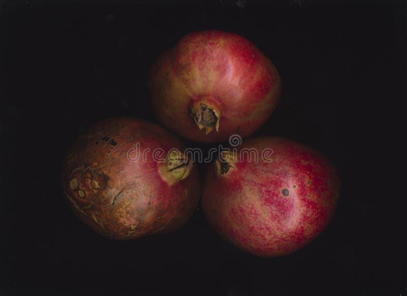 pomegranates royaltyfri foto