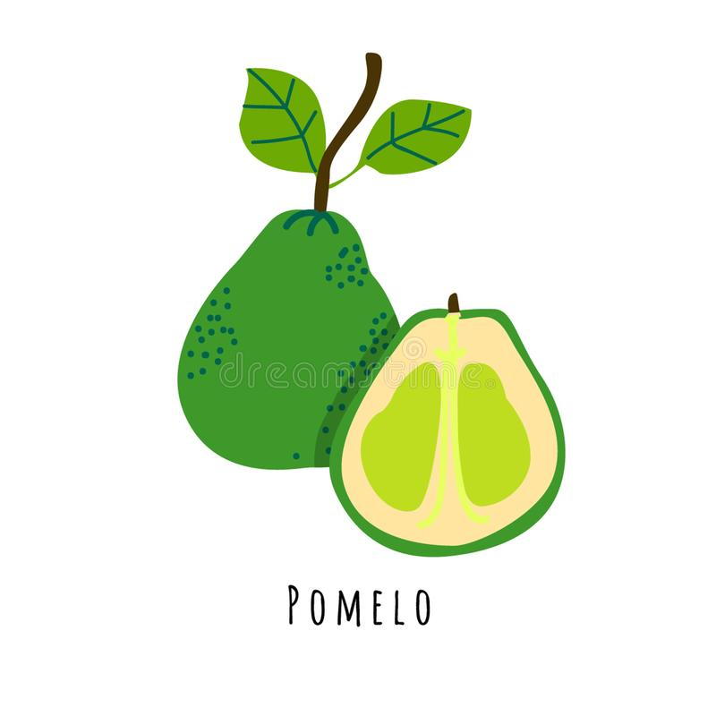 Pomelo fruit flat vector illustration. Cartoon slices of fresh tropical fruit. Isolated icon with shadow. Citrus creative clipart with typography for healthy vector illustration