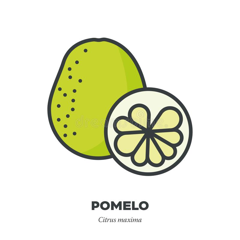 Pomelo fruit icon, filled outline style vector. Pomelo fruit icon, outline with color fill style vector illustration, whole fruit and cross-section stock illustration