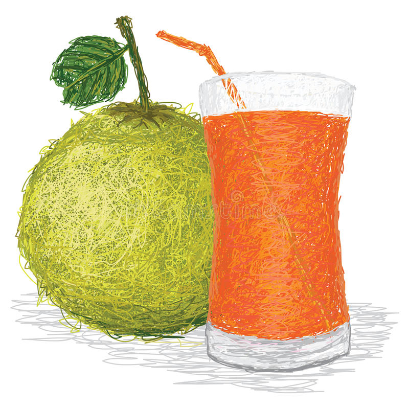 Pomelo juice. Closeup illustration of fresh pomelo fruit and glass of pomelo juice in white background vector illustration