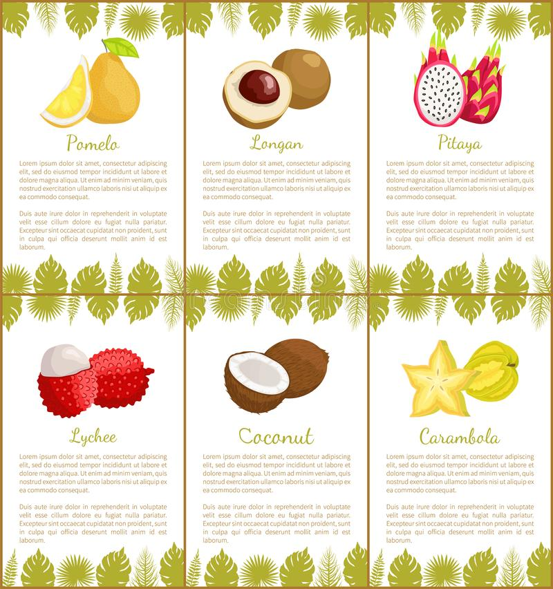 Pomelo and Longan Pitaya Set of Posters Vector. Pomelo and longan, pitaya and rambutan, coconut and carambola star set of posters. Text sample and decoration stock illustration