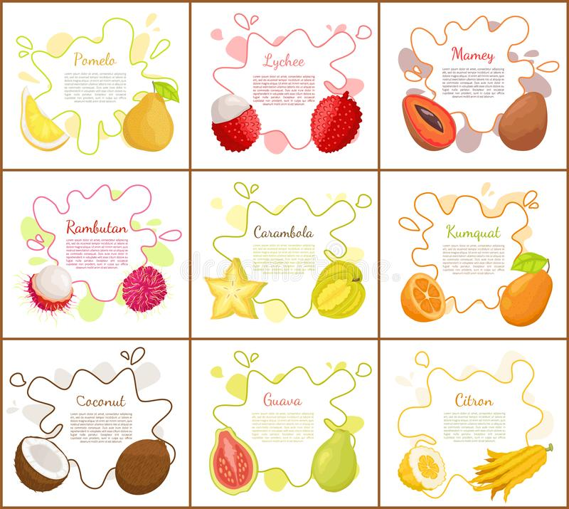 Pomelo and Lychee Mango Set Vector Illustration. Pomelo and lychee, mango tropical fruit slices and carambola star. Posters set with text sample, coconut and vector illustration