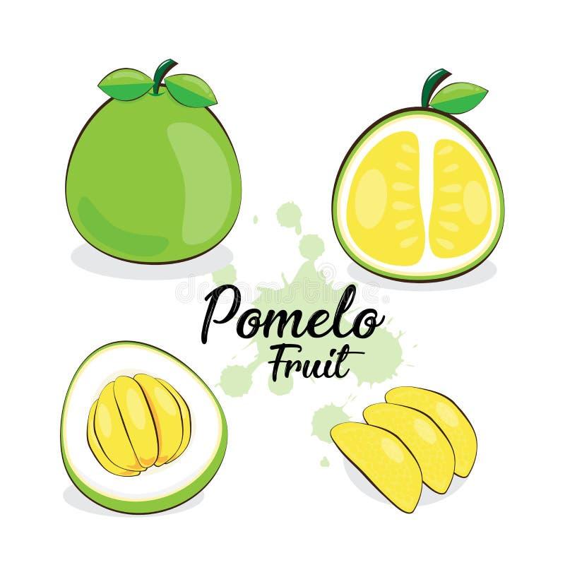 Pomelo owoc ilustracja wektor