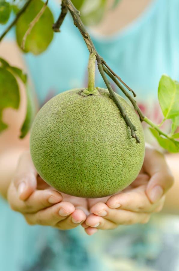 Download Pomelo owoc zdjęcie stock. Obraz złożonej z podśmietanie - 57663196