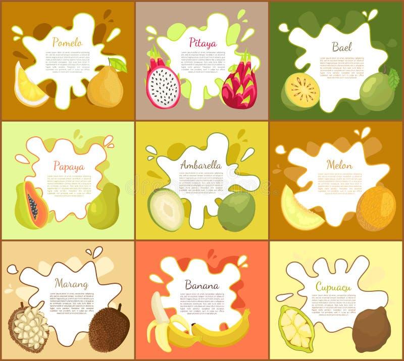 Pomelo and Pitaya Posters Set Vector Illustration. Pomelo and pitaya posters set with text sample. Marang and tropical fruit slices. Cupuacu and bael, banana and royalty free illustration
