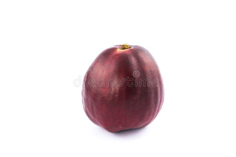 Pomerac, malaio Apple (malaccense do Syzygium (L ) Merrill & Perry) imagem de stock