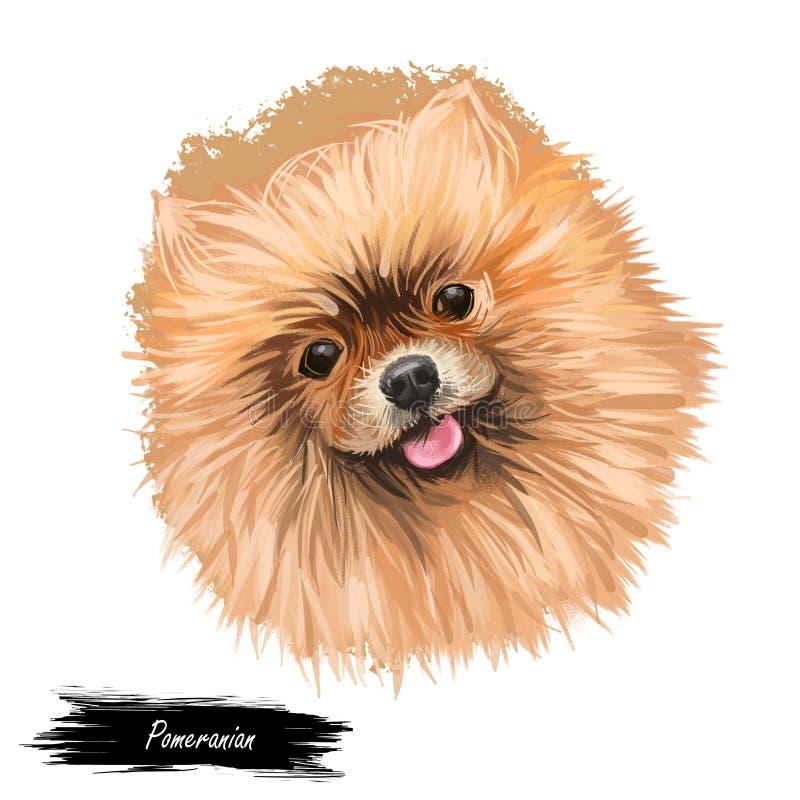 Pomeranian在白色隔绝的狗画象 数字手拉的狗的艺术例证网、T恤杉印刷品和小狗食物盖子的 库存照片