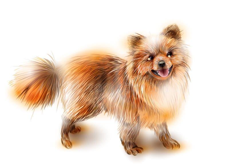 pomeranian波美丝毛狗 狗是2018年的标志 皇族释放例证