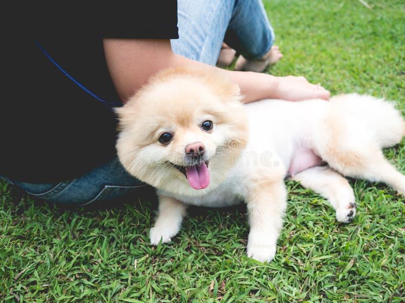 Pomeranian hund med kvinnan i gräsmattan arkivbilder