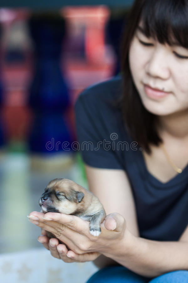 Pomeranian-Hund mit Frauen lizenzfreies stockfoto