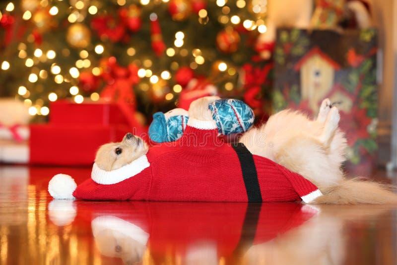 Pomeranian Santa fotografia stock libera da diritti