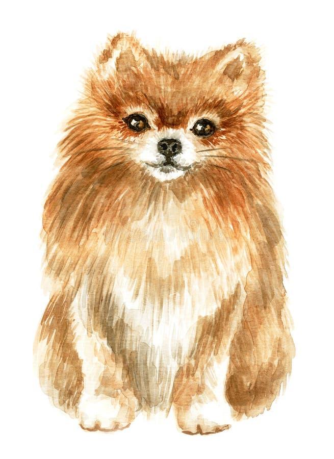 Pomeranian spitz-hund stock illustrationer