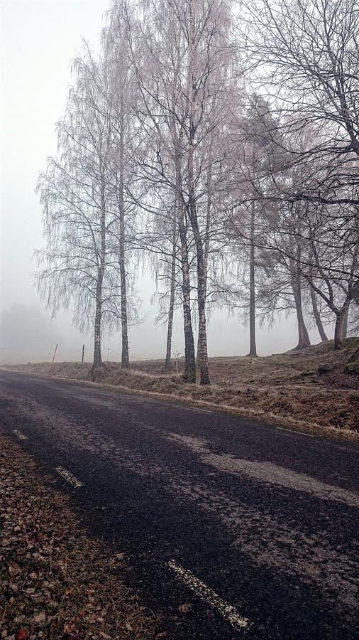 Pomeriggio nebbioso sulla campagna fotografia stock libera da diritti
