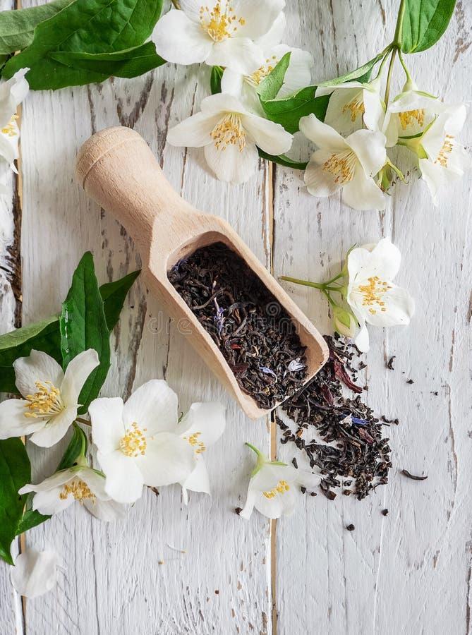 Pomiarowa miarka z czarną herbatą i świeżymi jaśminowymi kwiatami zdjęcia royalty free