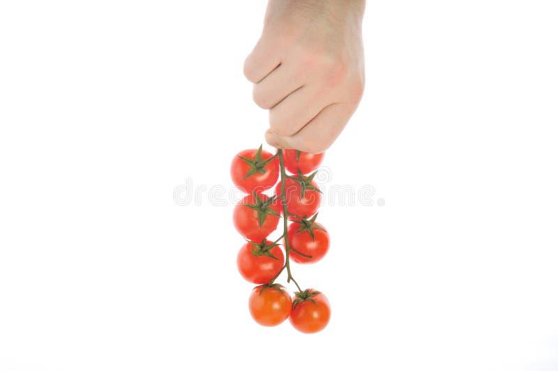 Download Pomidor obraz stock. Obraz złożonej z roślina, pieprz - 13335465