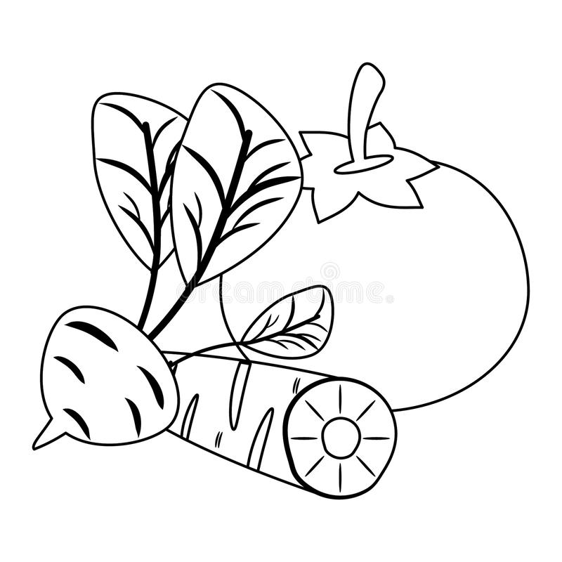 Pomidor i marchewka z rzodkwi? w czarny i bia?y ilustracja wektor