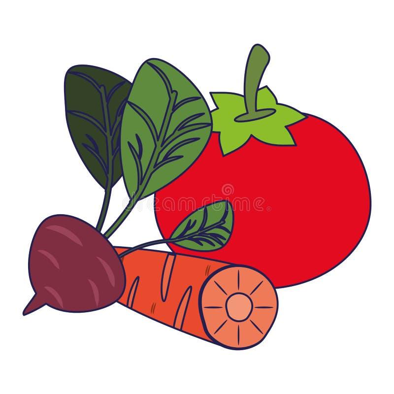 Pomidor i marchewka z rzodkwi niebieskimi liniami ilustracji